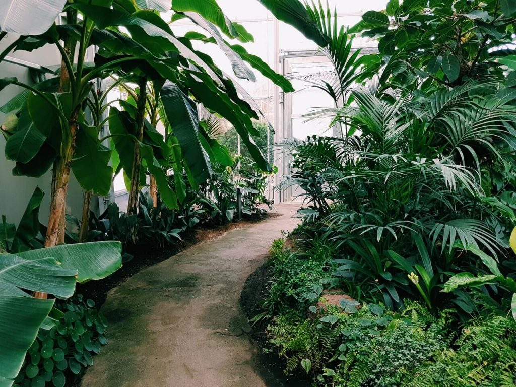photography-of-pathway-surrounded-by-plants-1